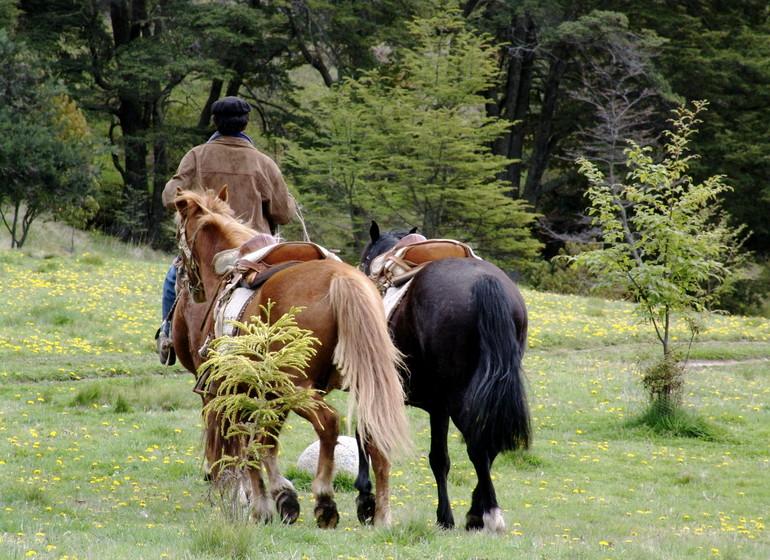 Chili Voyage Carreterra Austral Mallin Colorado chevaux
