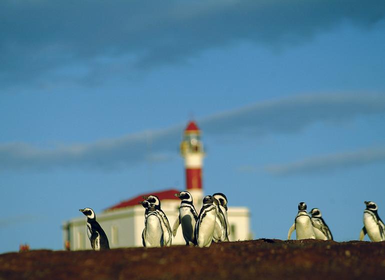 Chili Voyage Patagonie Isla Magdalena