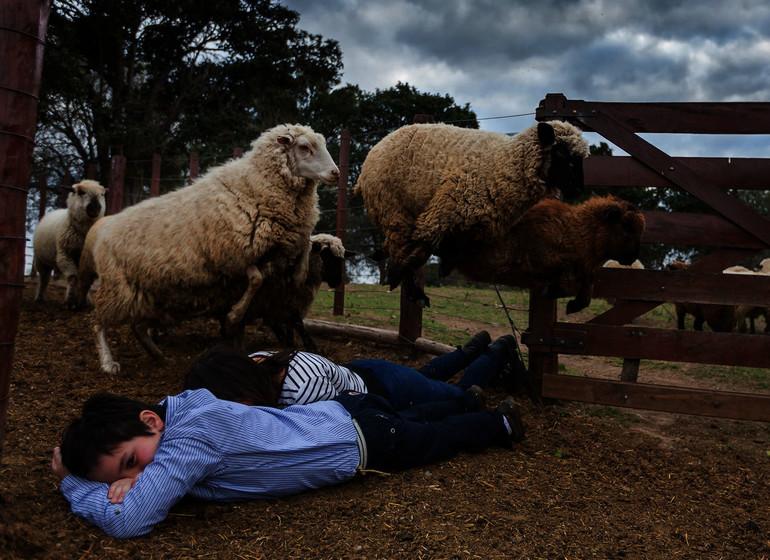 Argentine Voyage Estancia El Colibri moutons