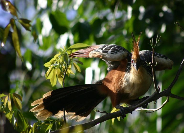 Pérou Voyage Amazonie oiseau