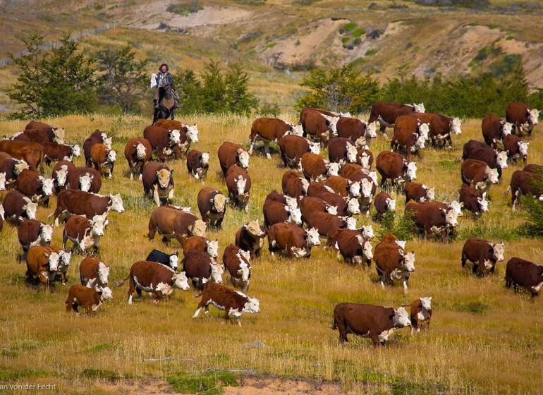 Argentine Voyage Nibepo Aike activité de gauchos