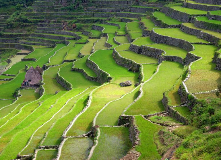 voyage asie philippines rizières terrasses