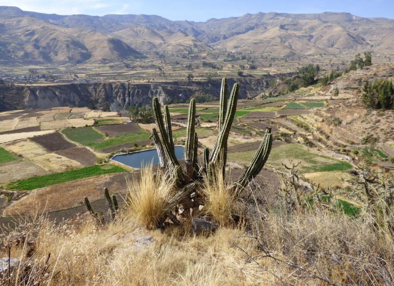 Pérou Voyage Canyon du Colca