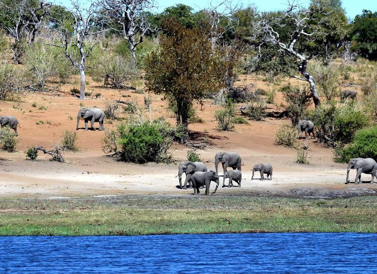 safari botswana chobe