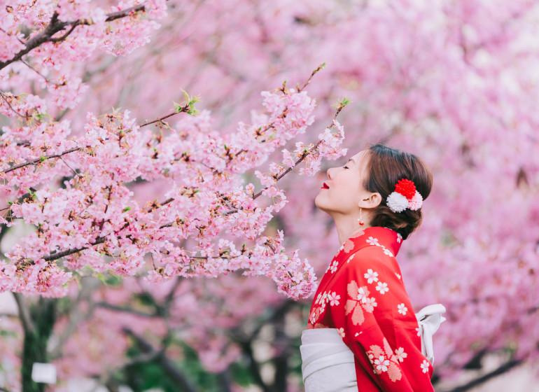 Sous les cerisiers en fleur