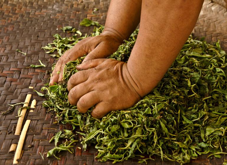 Art et culture du thé au Yunnan