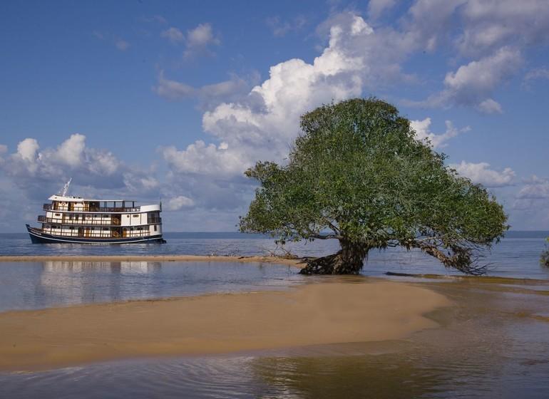 Brésil Voyage Amazon Dream avec arbre