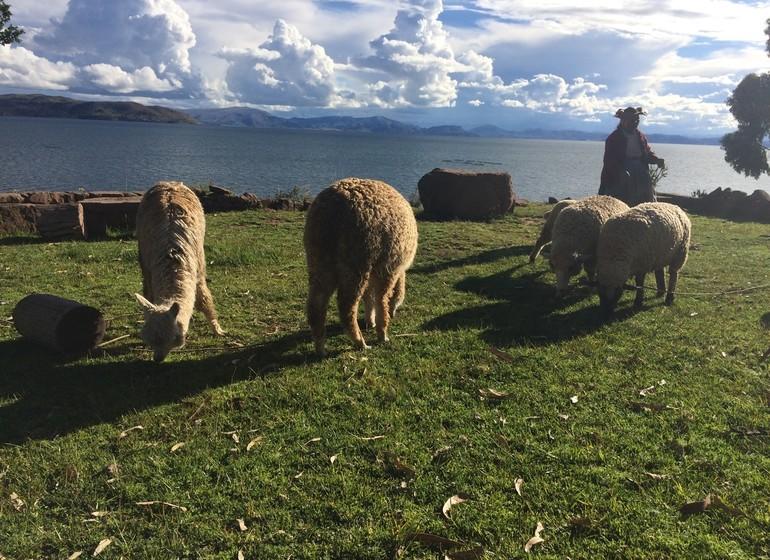 Pérou Voyage Lac Titicaca
