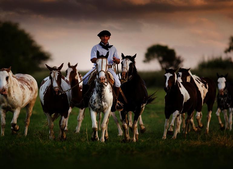 Argentine Voyage Estancia El Colibri chevaux avec gaucho