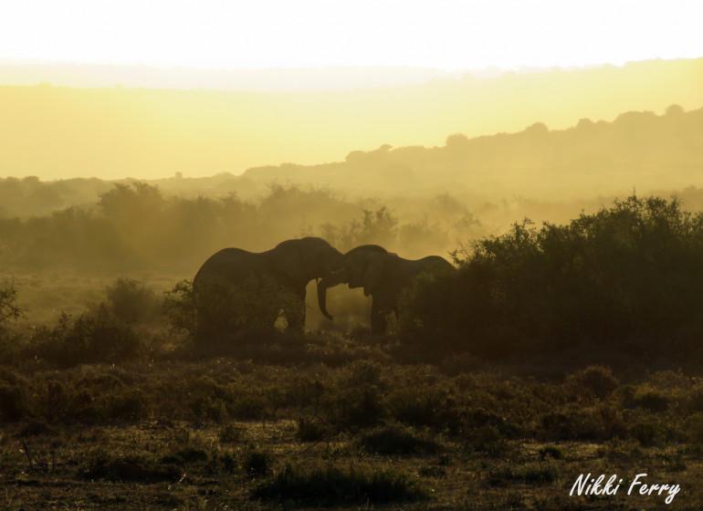 voyage afrique du sud elephants