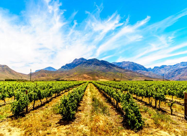 voyage afrique du sud vignobles