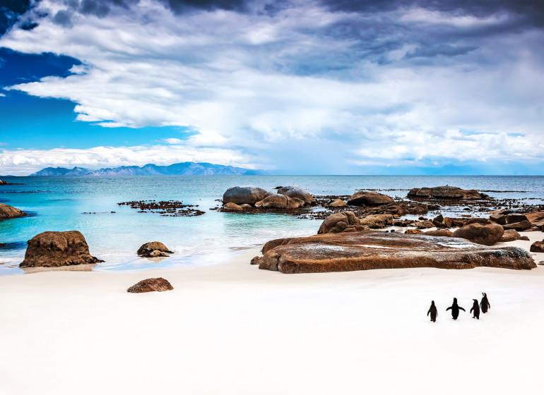 voyage afrique du sud cap de bon espérance