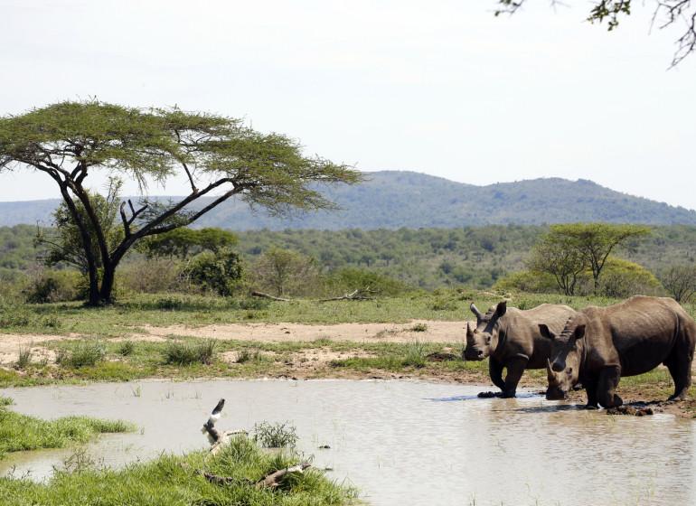 voyage afrique du sud hluhluwe