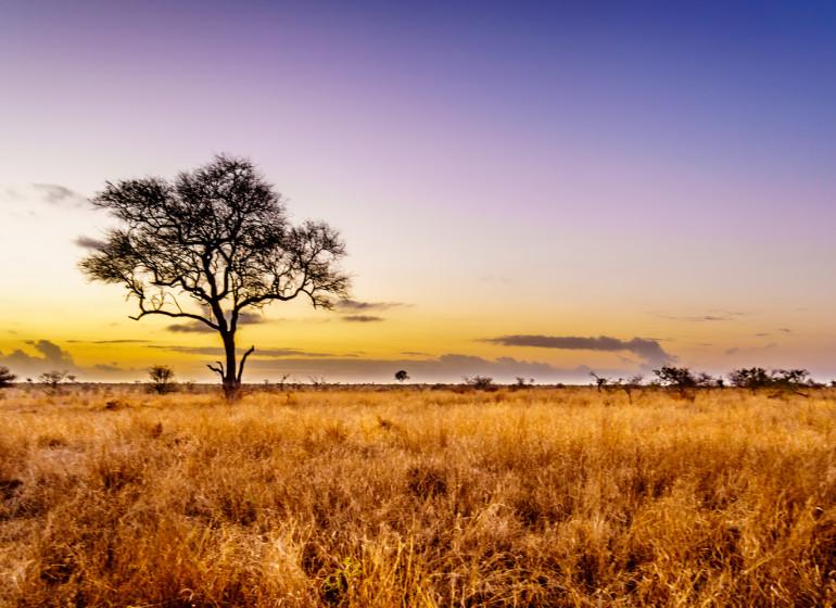 voyage afrique du sud kruger