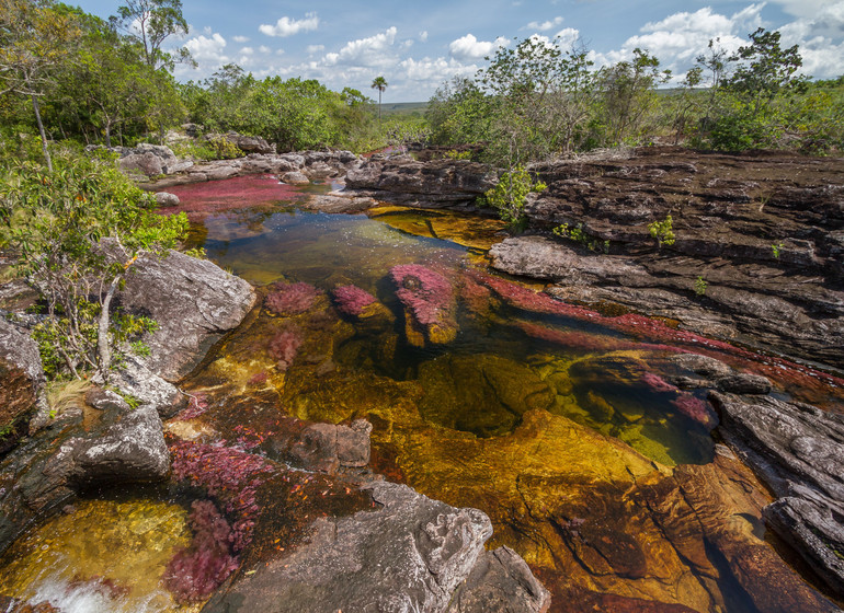 Colombie Voyage Cano Cristales Manigua Lodge nature environnante