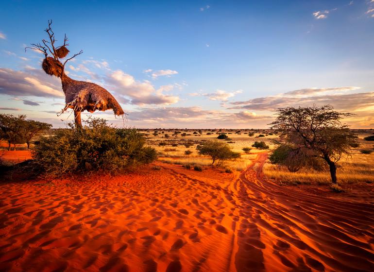 voyage namibie kalahari