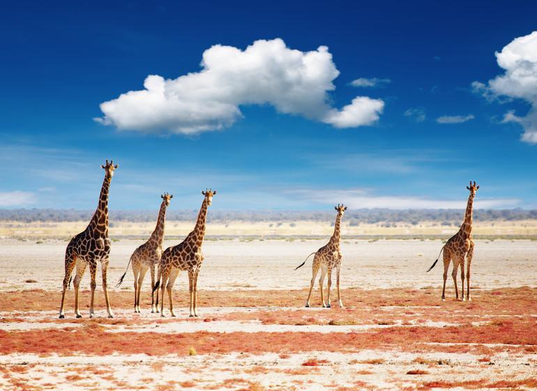 voyage namibie etosha