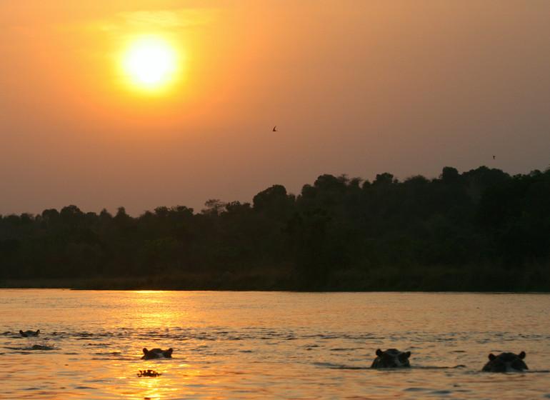 voyage ouganda hippopotames