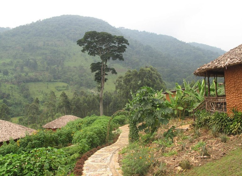 voyage ouganda bwindi