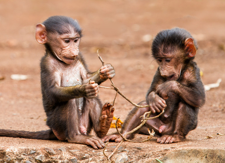 safari tanzanie ngorongoro singes