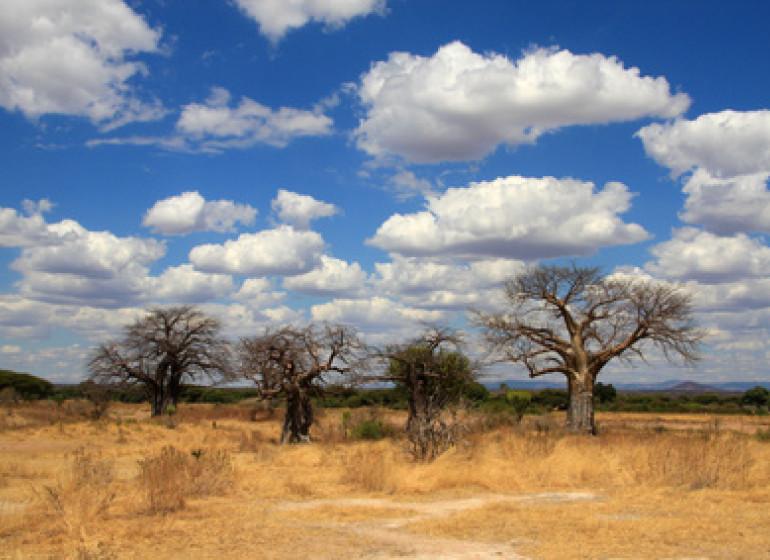 safari tanzanie selous