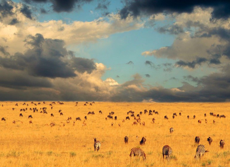 safari tanzanie serengeti