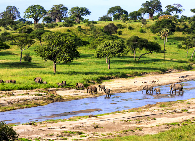 safari tanzanie elephants