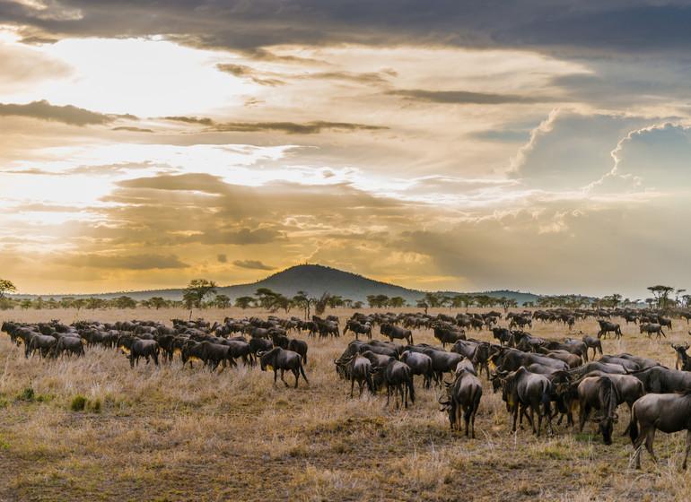 safari tanzanie grande migration