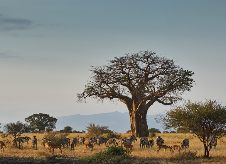 safari tanzanie tarangire