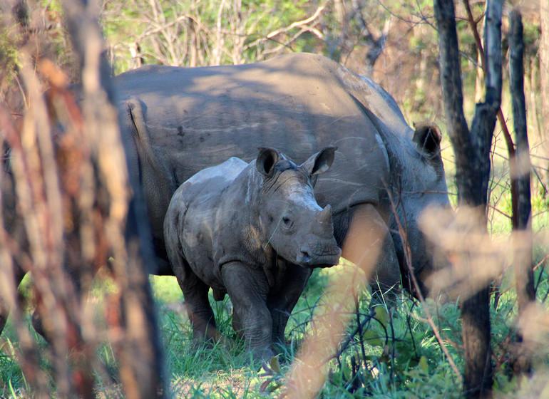 voyage zimbabwe rhinoceros