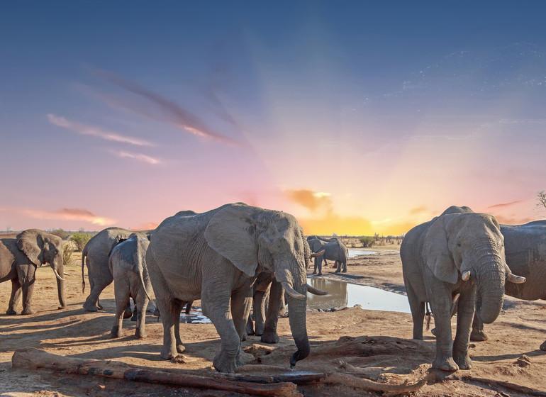 voyage zimbabwe elephants