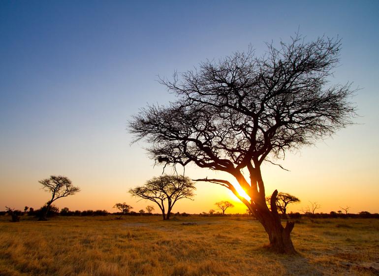 voyage zimbabwe hwange