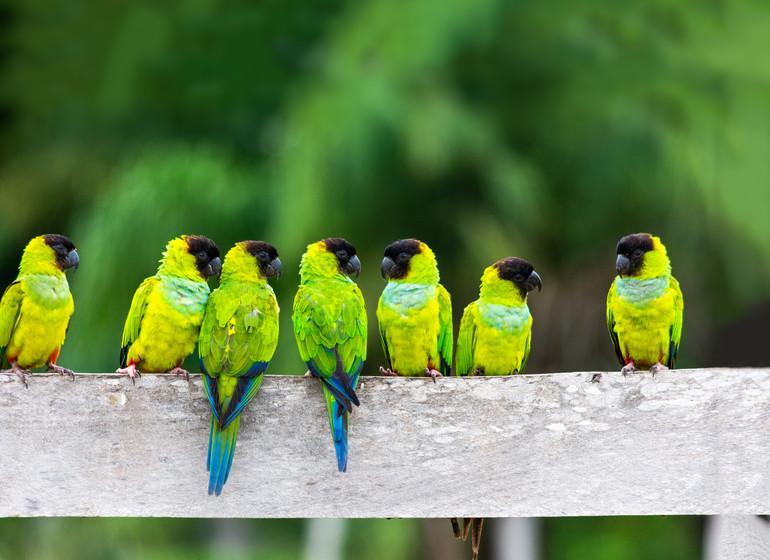 Brésil Voyage Pantanal oiesaux verts
