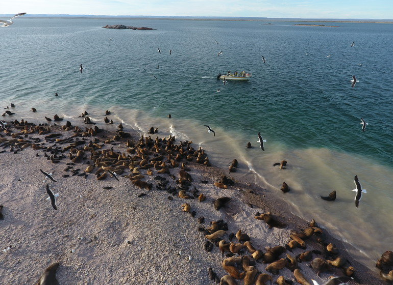 Argentine Voyage Patagonie colonie de lions de mer