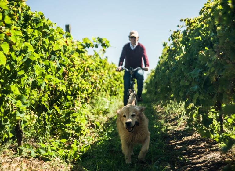 Uruguay Voyage Casatinto à vélo dans les vignes