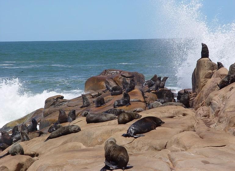 Uruguay Voyage Cabo Polonio colonie de lions de mer