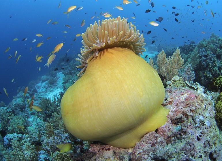 Voyage Asie Philippines Bohol South Palms Resort Panglao plongée