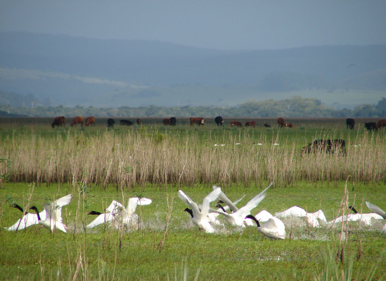 Uruguay Voyage Guardia del Monte faune