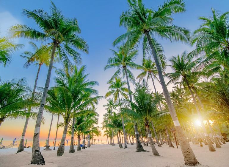 Voyage Asie Philippines Bohol South Palms Resort Panglao Palmeraie