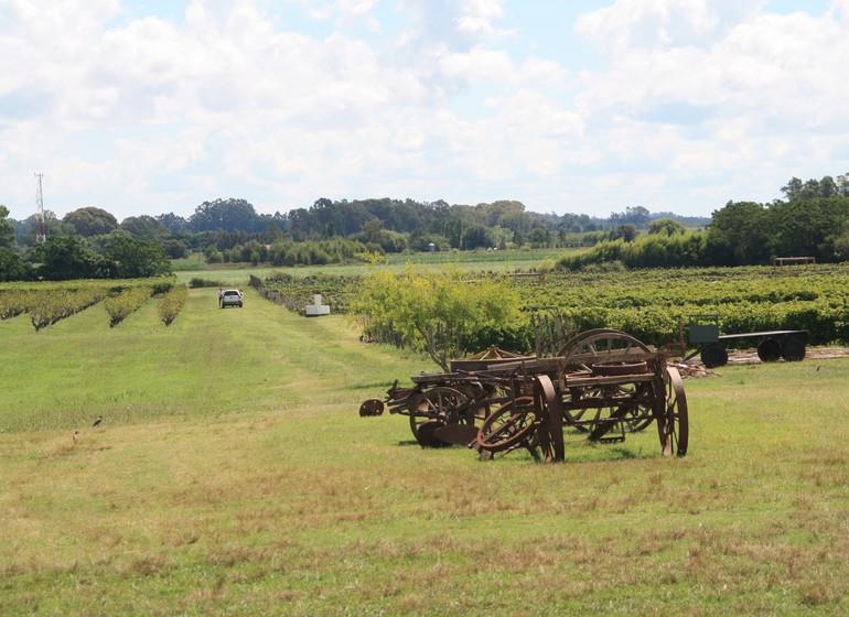 Uruguay Voyage Casatinto les vignes