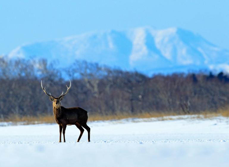Autotour à Hokkaido