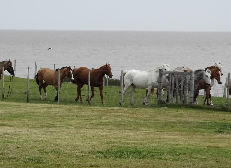 Uruguay Voyage caballos
