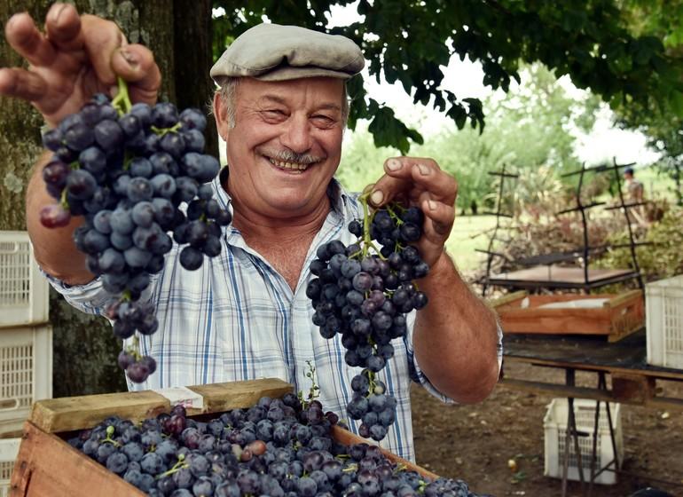 Uruguay Voyage récolte raisins