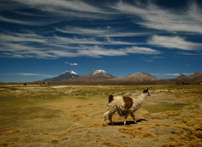 Bolive Voyage Altiplano