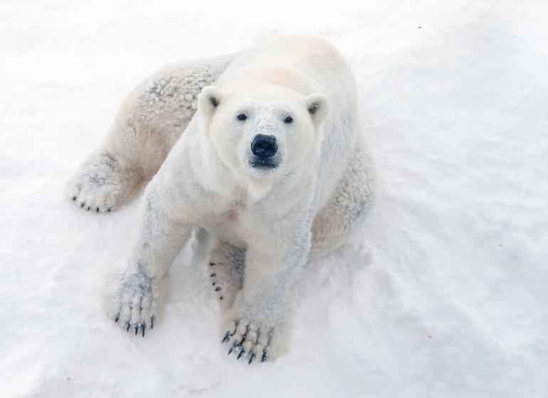 Spitzberg : les Highlights de l'Arctique