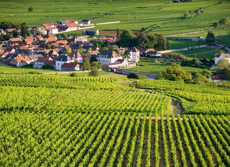 Vignes de la Bourgogne