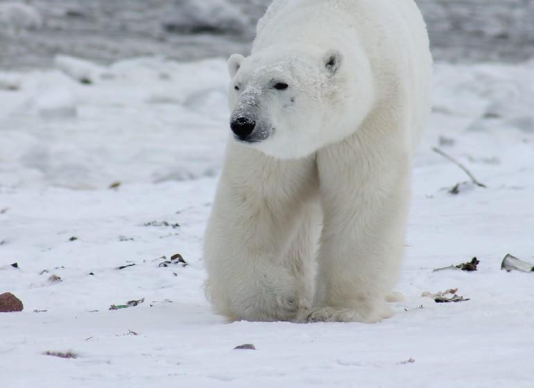 Spitzberg & Svalbard : le royaume de l'ours blanc